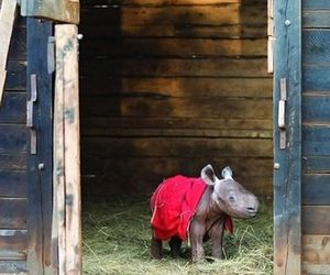 animals, baby, and barn image