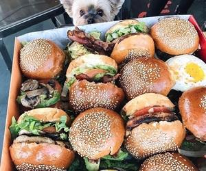 animal, beautiful, and food image