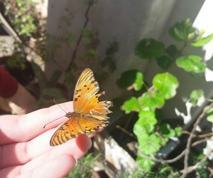 animal, beautiful, and butterfly image