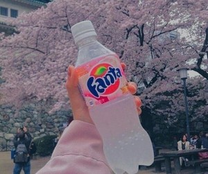 fanta, pink, and aesthetic image