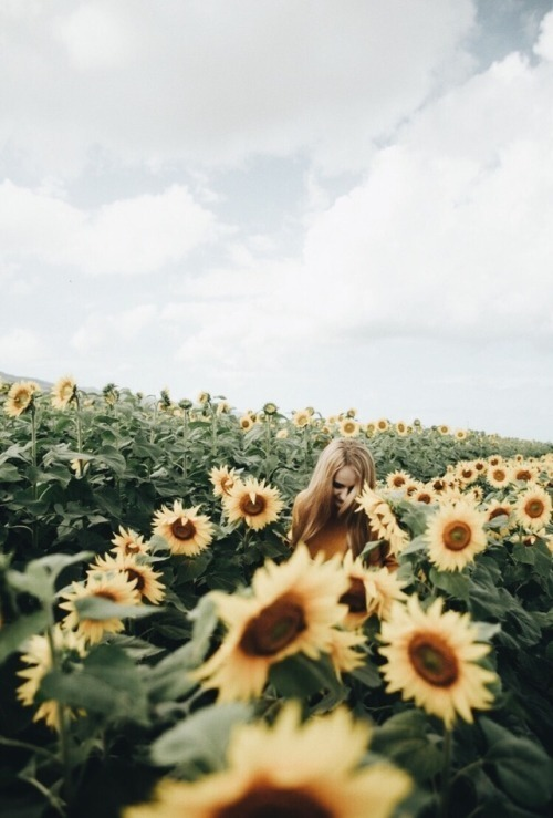 beauty, flowers, and sunflowers image