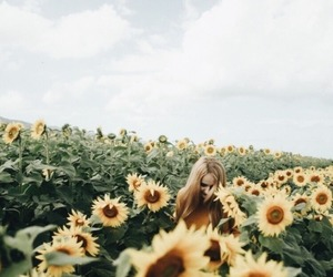 flowers, sunflowers, and aesthetic image