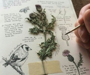 aesthetic, book, and bird image
