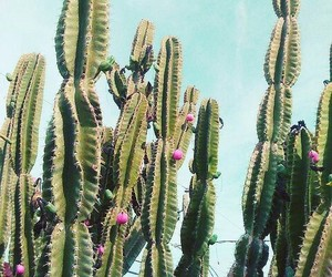cactus, summer, and green image