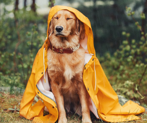animal, dog, and rain image