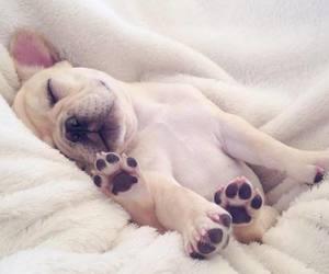 amazing, cute dog, and dog image
