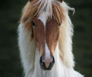 Animales, belleza, and caballo image