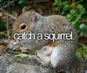 before i die, squirrel, and cute image