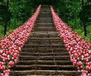 beautifull, flowers, and forest image