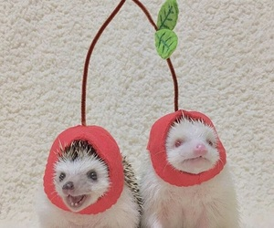 aesthetic, hedgehog, and red image