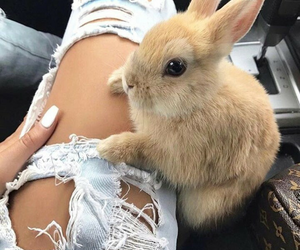 little, rabbit, and cute image