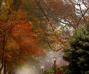 autumn, leaves, and trees image