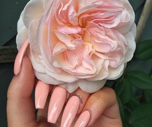 fashion, flower, and nails image