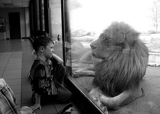 lion, boy, and black and white image