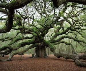 Image by Biosphere