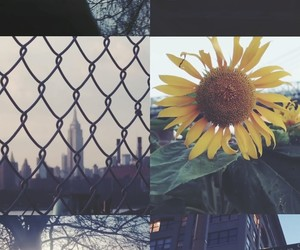 background, Brooklyn, and city image