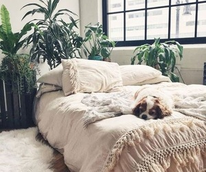 bedroom, home, and dog image