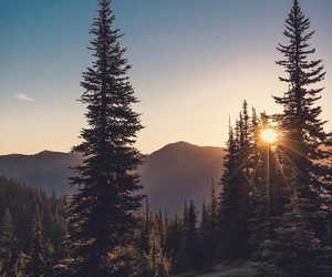 nature, tree, and sun image