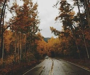 forest, car, and fall image