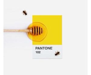 yellow, honey, and bee image
