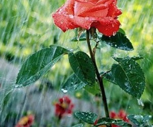 beautiful, nice, and flowers image