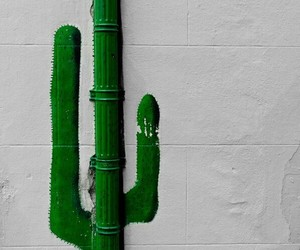 art, cactus, and street image