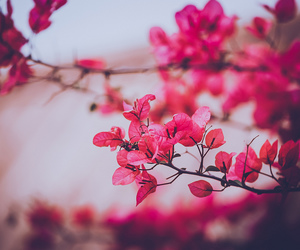 flower, nature, and plant image