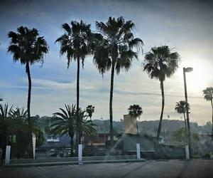 california, los angeles, and palmtrees image