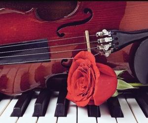 piano, rose, and violin image