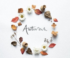 autumn, decoration, and design image