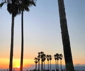 beautiful, los angeles, and palmtrees image