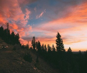 forest and sunset image