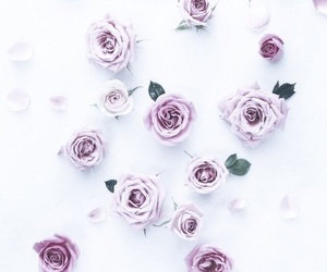 flowers, pale, and wallpapers image