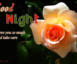 cute goodnight texts and love good night image