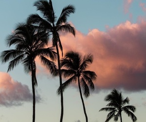 palm trees image