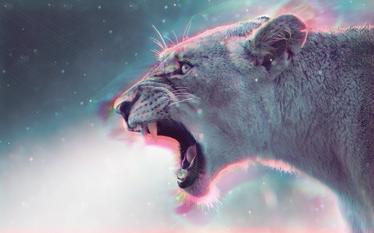 animal, lion, and roar image