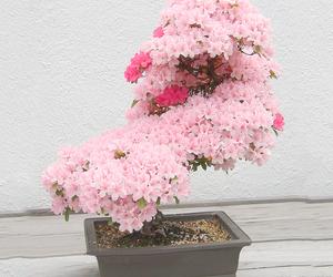 pink, sakura, and beautiful image