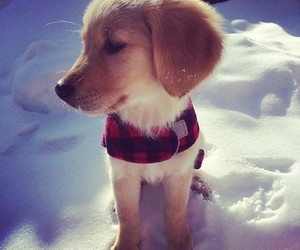 animal, puppy, and snow image