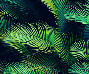 green, nature, and wallpaper image