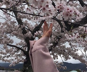 aesthetic, japan, and sakura image
