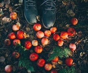 autumn, apple, and fall image