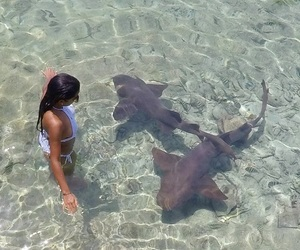 bahamas, shark, and summer image