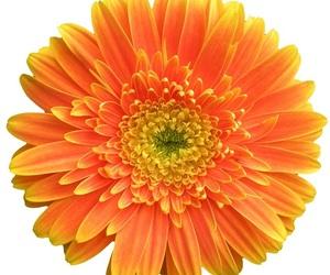 flower, icon, and orange image