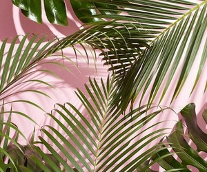 pink, wallpaper, and green image