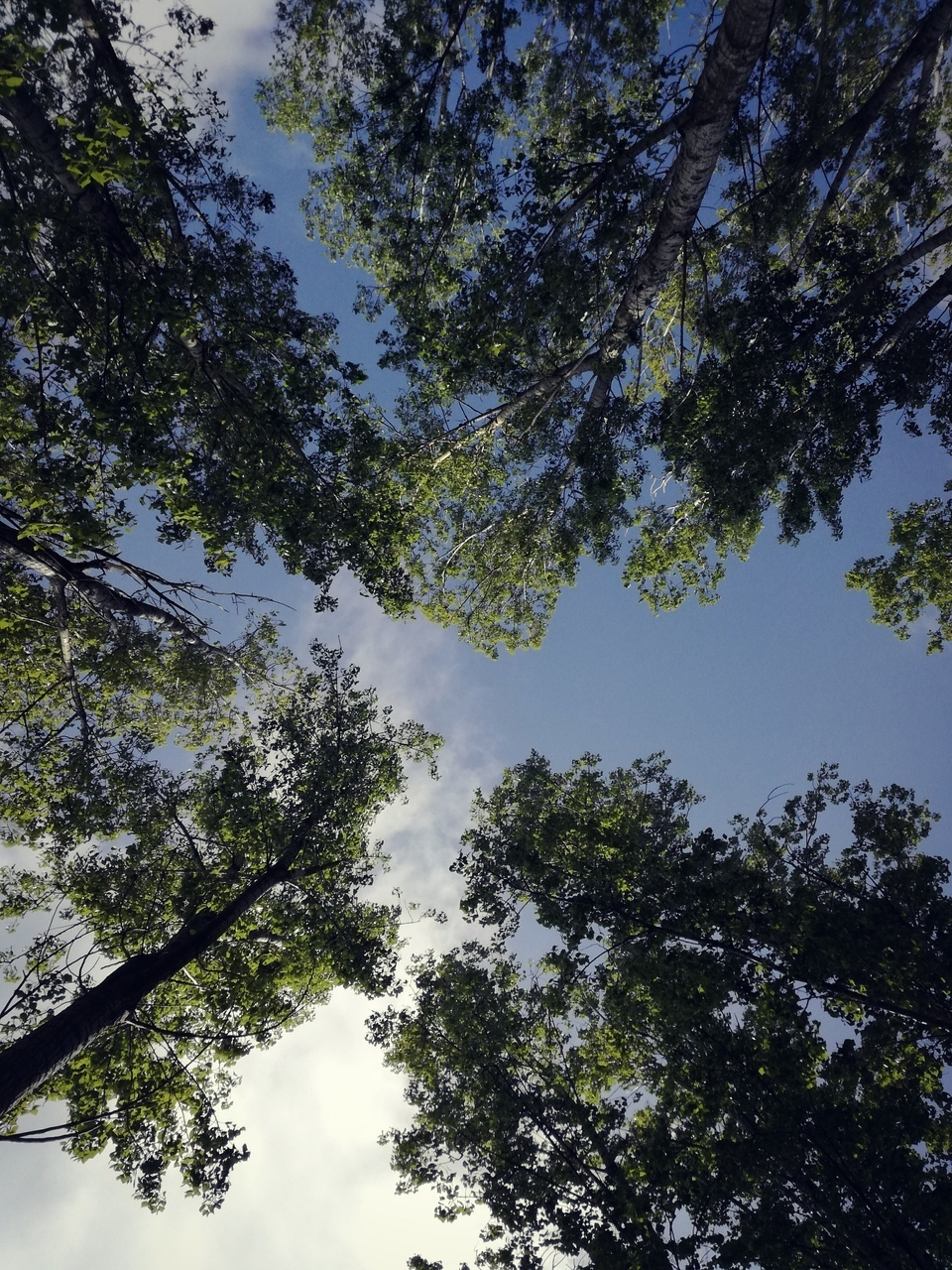 forest, tree, and sky image