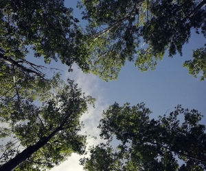 forest, sky, and summer image