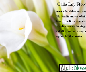 calla lily flowers image