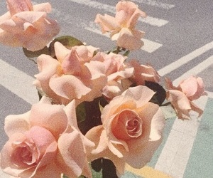 flowers, rose, and peach image