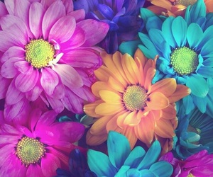 flowers, wallpaper, and colors image