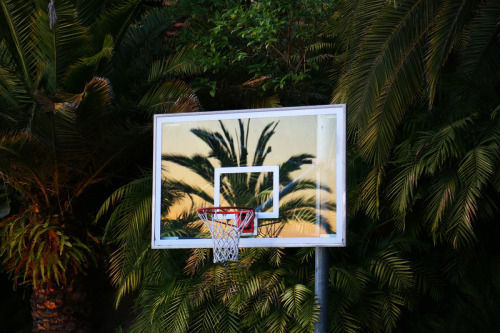 Basketball, palms, and summer image